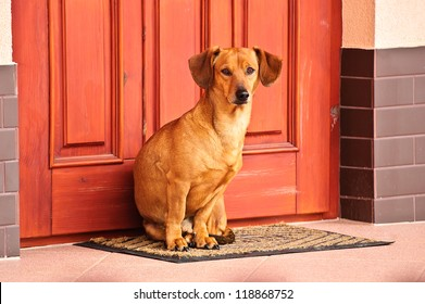 Dog sitting in front of the door