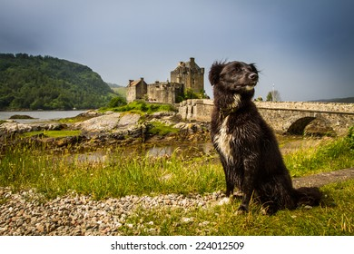 Dog sitting in front  of Eilan Donan Castle, Scotland