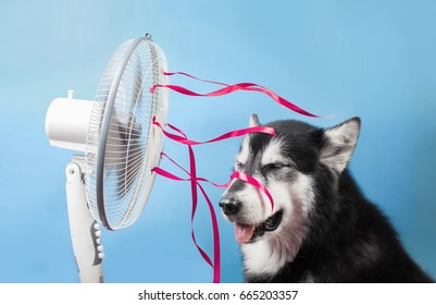 The dog is sitting in front of the fan