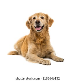 Dog is sitting frontal and looking at camera, isolated on white background, Cute Puppy on a white,