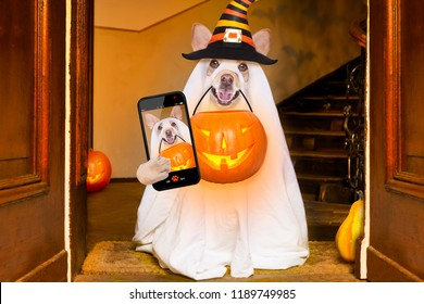 dog sitting as a ghost for halloween in front of the door  at home entrance with pumpkin lantern or  light , scary and spooky, for a trick or treat taking a selfie