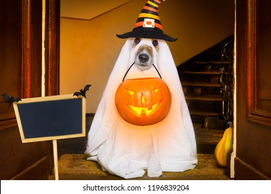 dog sitting as a ghost for halloween in front of the door  at home entrance with pumpkin lantern or  light , scary and spooky, for a trick or treat, banner , placard to the side