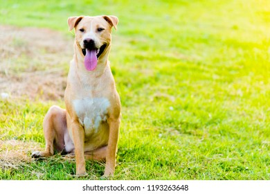 Dog sitting in the grass happily.