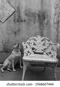 Dog sitting next to the bench black and white