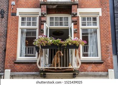 dog sitting on balcony in Amsterdam