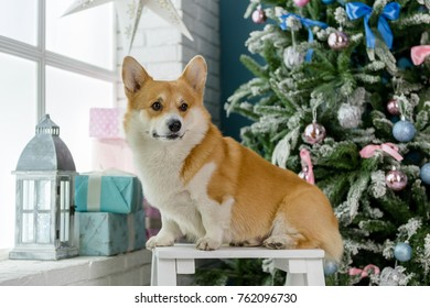 A dog sitting on a bench by a window with a christmas tree in the background looking to the left