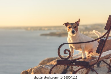 Dog sitting on bench at Cape Greco, Ayia Napa, Cyprus view point