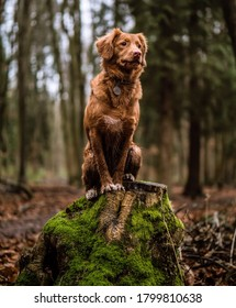 dog sitting on a cutted down tree