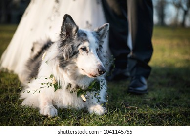 Dog sitting on the grass in front of a wedding couple