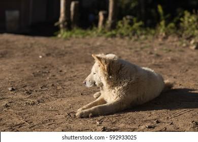 Dog sitting on the ground.