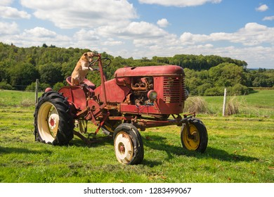 Dog sitting on old rusty vintage red tractor in agriculture landscape