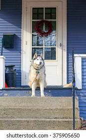 A dog sitting on a porch waiting