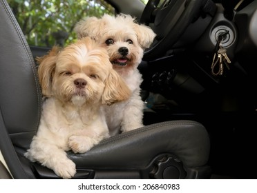 Dog sitting on the seat in a car, ready to go.