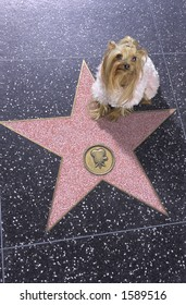 Dog sitting on Walk of Fame