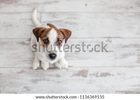 Dog sitting on wooden