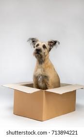 dog sitting in a paper box