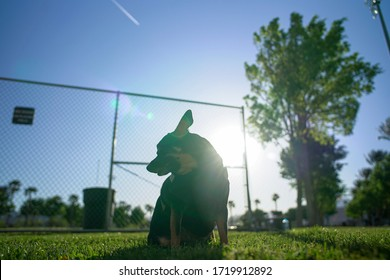 Dog Sitting In The Park On A Sunny Summer Day