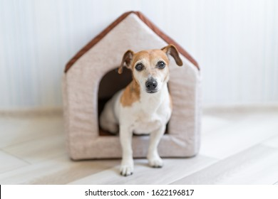 Dog sitting in pet booth. Cozy house inside interior