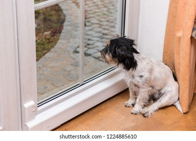 Dog is sitting at rain on the glass door and is looking out