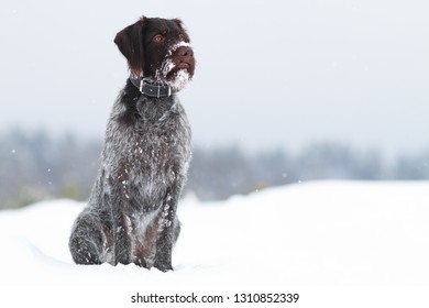 dog sitting in the snow on winter blurred background
