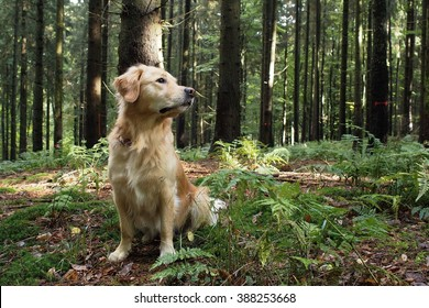 Dog sitting in the wood