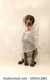 Dog sitting wrapped in bubble wrap