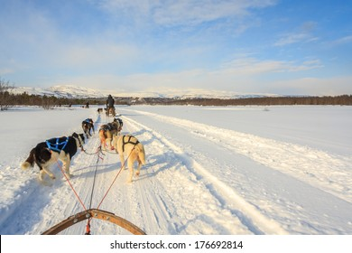 Dog sled adventure in Norway