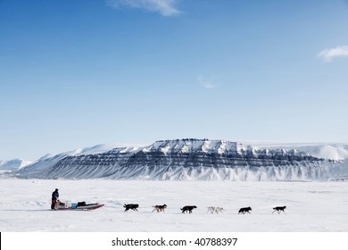 A dog sled running on a barren winter landscape