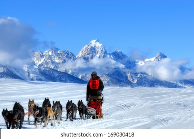 Dog Sled team in the Great American Dog sled race. They are running through the mountains in the snow.