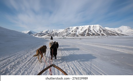Dog sled tour across a barren winter landscape, Svalbard, Norway