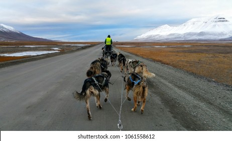 Dog sledding in the arctic. Photo taken just outside Longyearbyen on the island of Spitsbergen on the Svalbard archipelago.