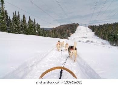 Dog sledding in a beautiful rural setting