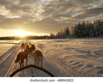 Dog sledding expedition in Lapland