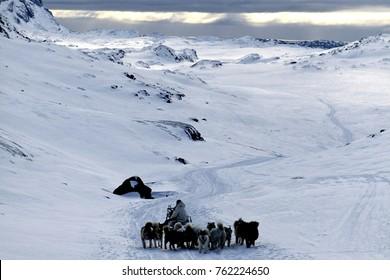 Dog sledding in Greenland.