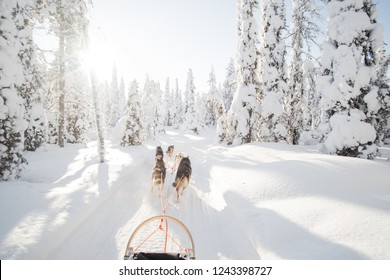 Dog sledding in Lapland. Winter wonderland landscape photo. Sledge and dog team in the center of the photo. Empty space for text.
