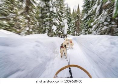 dog sledding with a motion blur