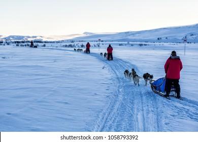 dog sledding in Northern sweden