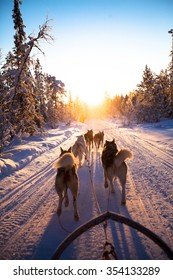 dog sledding on the snow, with the tree and sun