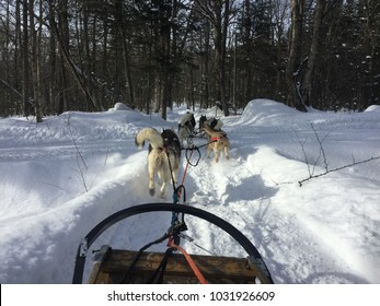 Dog sledding with these powerful huskies through the cold Quebec winter!