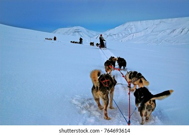 Dog sledge driving in Svalbard