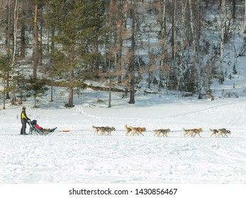 Dog sledge for tourists in Listvyanka village in Russia; Husky dogs trailing sledge for taking a tourist to see beautiful scene along the way that fully with snow and making them exciting experience.