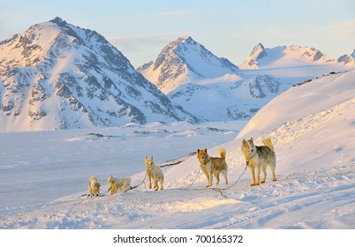 Dog sledging  in cold snowy winter in Greenland