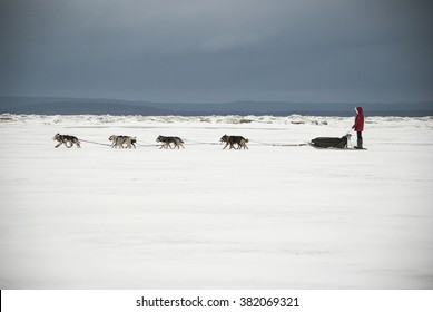 Dog sleds running on the White Sea. Expedition Fedor Konyukhov. Russia, Arkhangelsk Region, Onega District. February, 2016