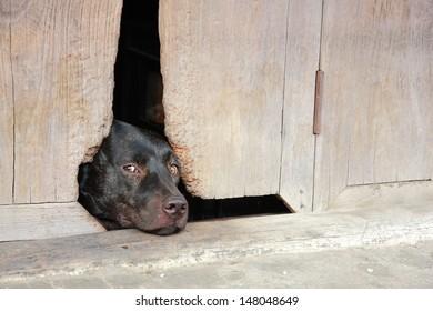 a dog sleep at hole door