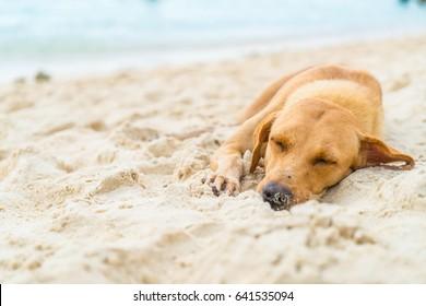dog sleep on the beach