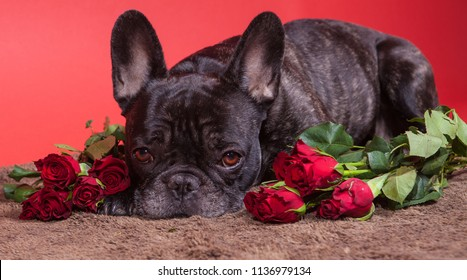 Dog sleeping in a brown mat with red roses