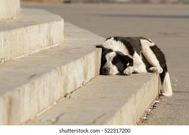 dog sleeping friend tramp