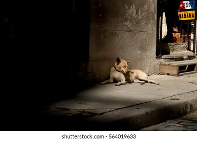Dog sleeping in Havana, Cuba