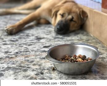 Dog sleeping near bowl of food.