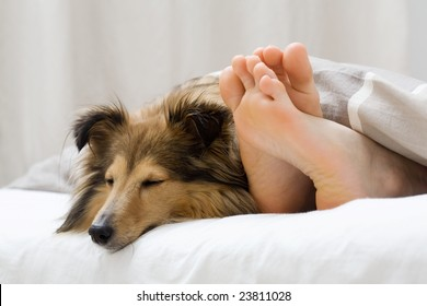 Dog sleeping on the bed by owners feet